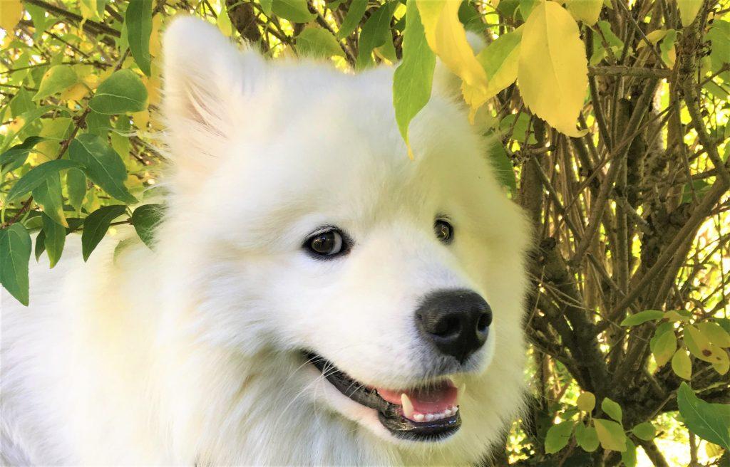 """lächelnder Hund """"Nours"""""""